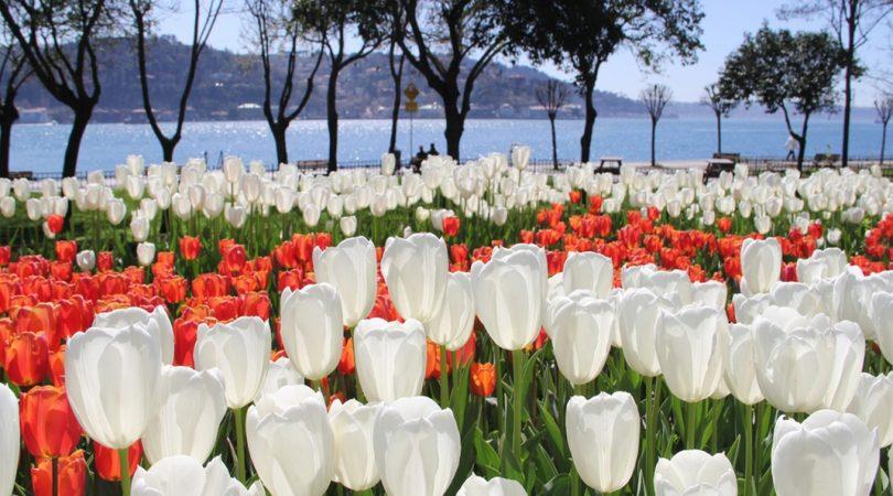 istanbul-lale-festivali-lale-resim-009