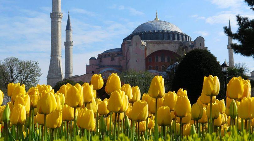 tulip-time-in-istanbul